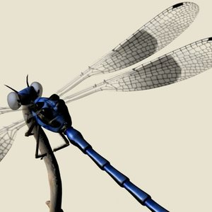 3ds max dragonfly damselfly segments