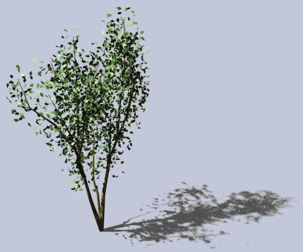 tree river birch 3d model