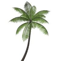 free c4d model coconut palm tree