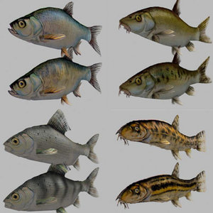 3d model fish carp pike salmon