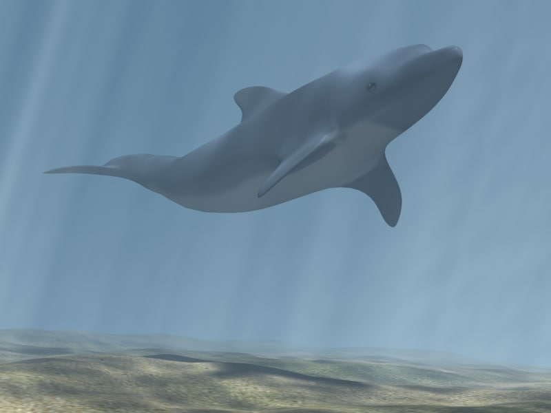 dolphin underwater resolution 3d max