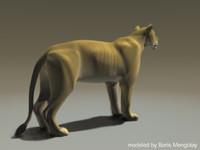 lion cat lwo