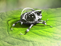 max bug