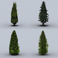 trees conifers 01