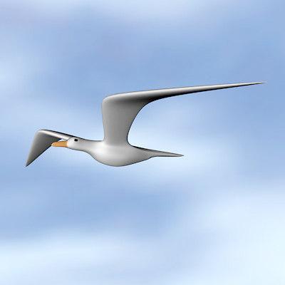 seagull maritime 3d model