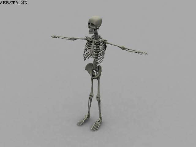 free skeleton 3d model
