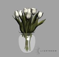 ma tulip