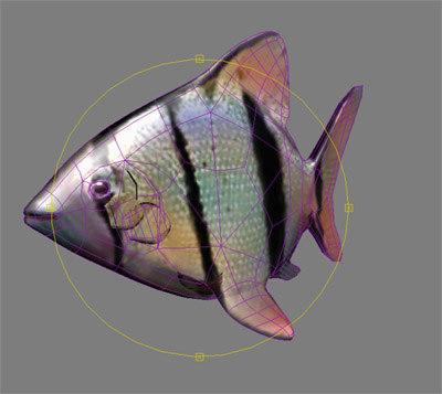3d fish pterophyllum scalare