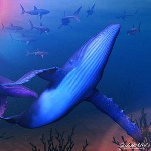 3d model works humpback whale