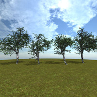 birch trees 3d model