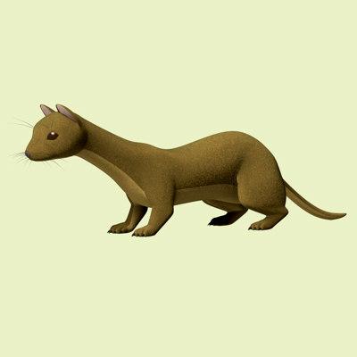 weasel ferret mink 3d model