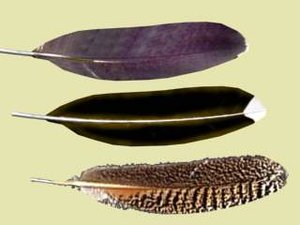 3d model feathers
