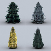 trees conifers 02