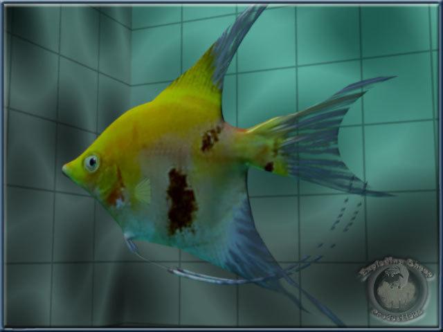 angel-fish animation lwo