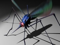 3d model mosquito