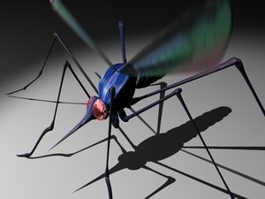 3d model mosquito