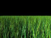grass plant 3d model