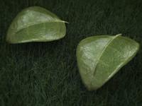 leaf01.max