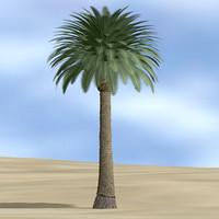date palm l 3d model