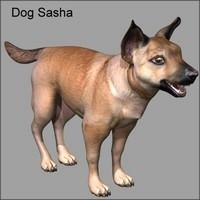 dog canine 3d model