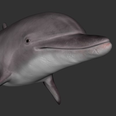 3ds bottlenose tursiops dolphin