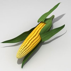 corn ear 3d model
