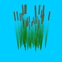 cat tails plants 3d model