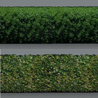 hedges 01