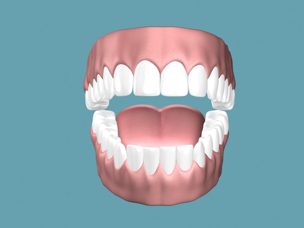 gums teeths tongue 3d model
