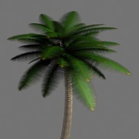 palm tree 3d 3ds