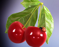 cherry ladybird 3d model