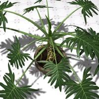 3d philodendron selloum