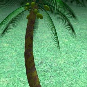 coconut palm 3ds