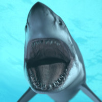 great white shark animations 3d model