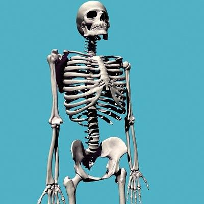 bones skeleton 3d model