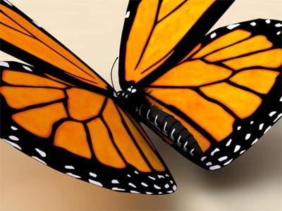 monarch butterfly 3d model