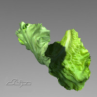 lettuce leave 3d model