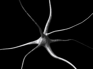 lwo nerve cell