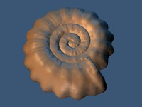 ammonite.rar