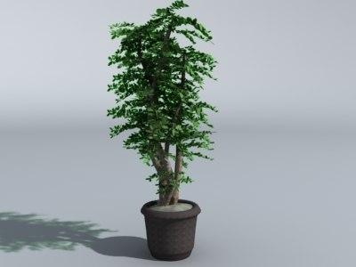 max tall plant