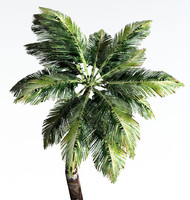 PALM_Tree_Dynamics.zip