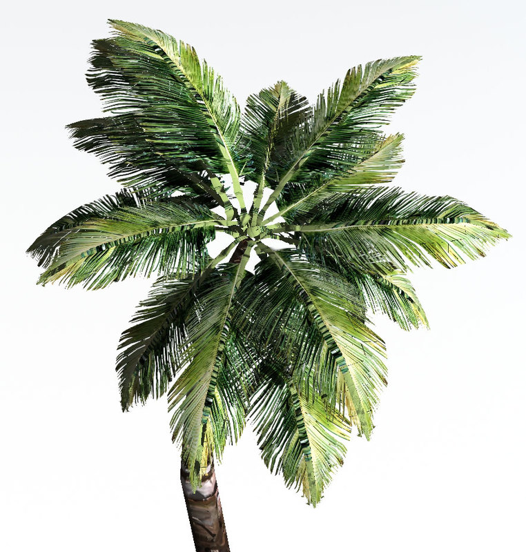 3d palm tree dynamic