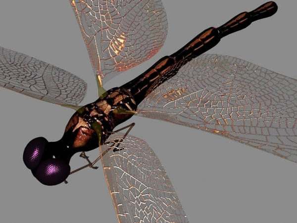 dragonfly flying max