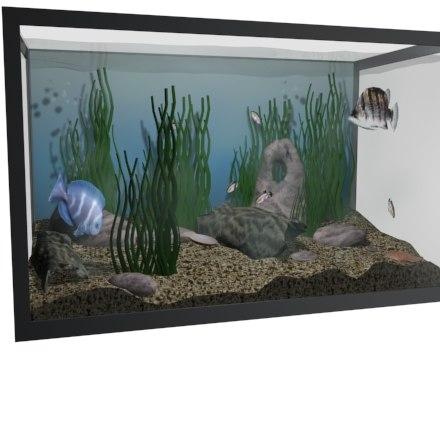 ma aquarium fish fishtank