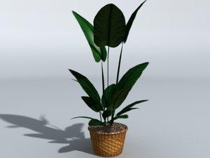 max house plant pot