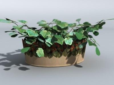 3d plant metal pot flower model