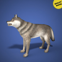 real time wolf 3d model