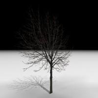 3d model of tree j3d