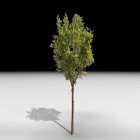 3d tree j3d
