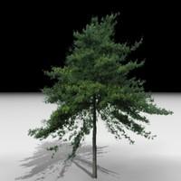 J3D_TREE006.zip